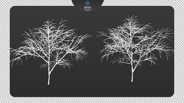 Verschillende winterbomen uitknippad verschillende winterbomen geïsoleerd