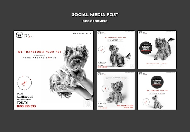 Verzameling instagram-berichten voor een bedrijf voor huisdierenverzorging