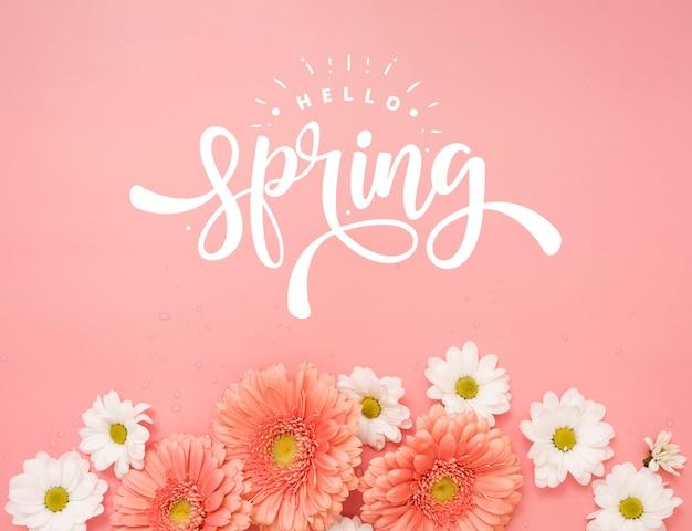 Vista superior de margaritas de primavera con manzanilla