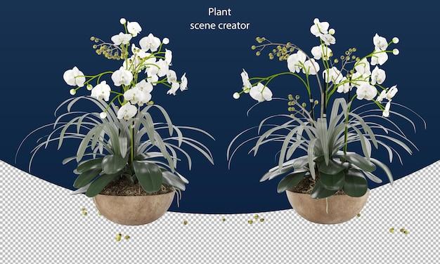 Vlinder orchidee in pot voor decoratie plant bloem rendering geïsoleerd