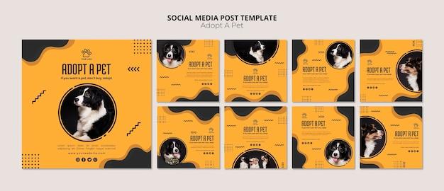Adoptez un article sur les médias sociaux d'un chien border collie pour animaux de compagnie