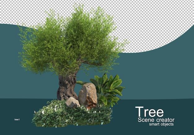 Affichage des résultats pour les arrangements d'arbres et d'arbustes