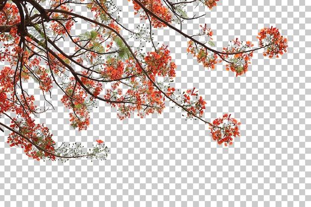 Arbre tropical fleurs feuilles et branche au premier plan isolé