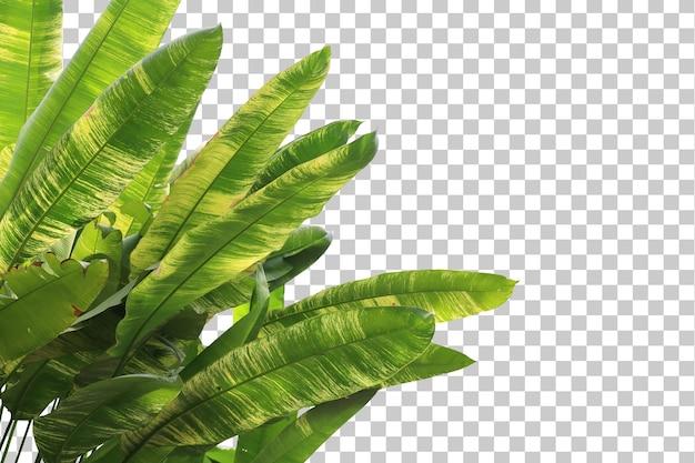 Arbre tropical laisse au premier plan isolé