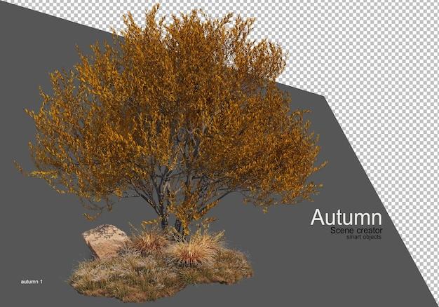 Beau jardinage d'arbres en automne