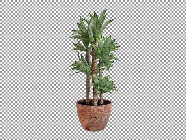 Belle plante en rendu 3d transparent isolé