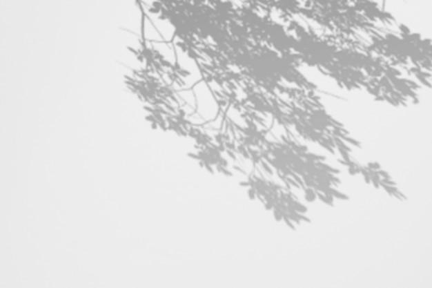 Branche d'ombres feuilles sur un mur blanc.