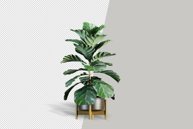 Cactus isolé rendu plante en pot vue de face isométrique créateur de scène 3d