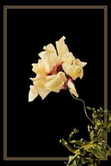 Cadre doré avec une fleur d'anémone séchée sur fond noir
