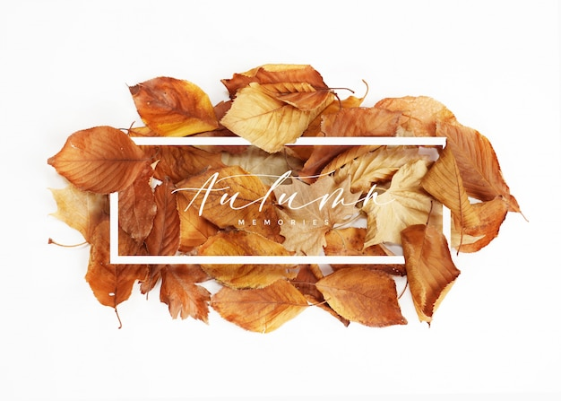 Cadre de feuilles d'automne