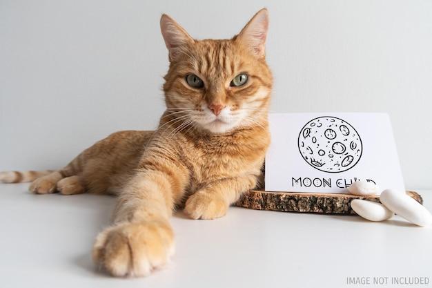 Carte postale rustique de maquette de chat de gingembre. carte horizontale avec galet blanc sur maquette de fond de tableau blanc. animal de compagnie mignon avec un espace pour votre image ou votre texte.