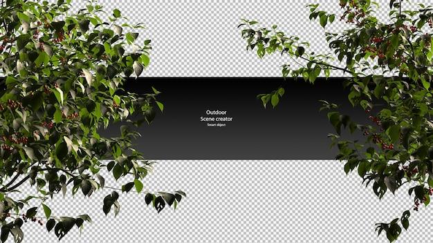 Cerisier chemin de détourage cerisier isolé