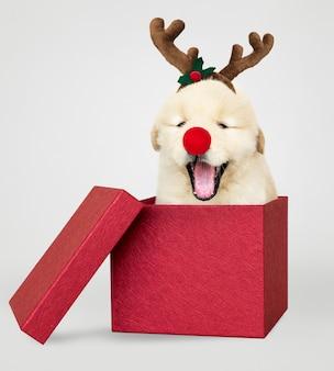 Chiot golden retriever dans une boîte cadeau de noël rouge