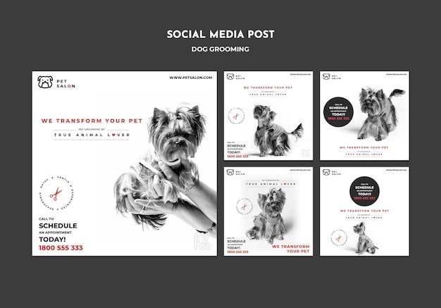 Collection de publications instagram pour une entreprise de toilettage pour animaux de compagnie