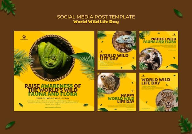Collection de publications instagram pour la journée mondiale de la faune avec des animaux