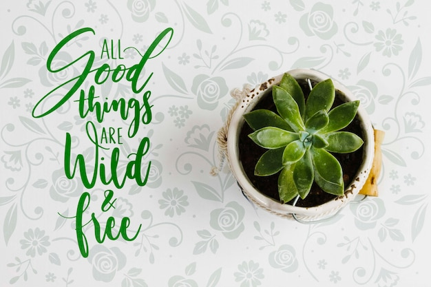 Concept de plante élégante vue de dessus