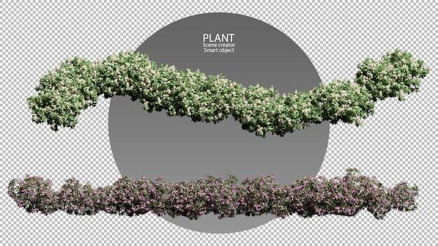 Différents types d'arbustes rendant un tracé de détourage isolé