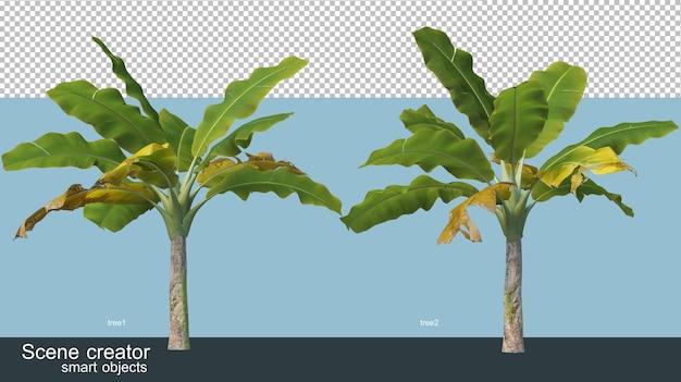 Différents types de rendu 3d de bananier