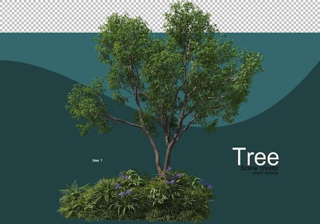 Disposition de divers arbres et herbes