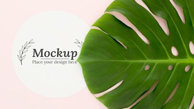 Disposition à plat de feuilles vertes avec maquette