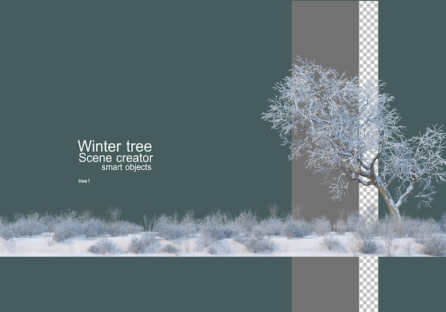 Divers arbres et plantes en hiver