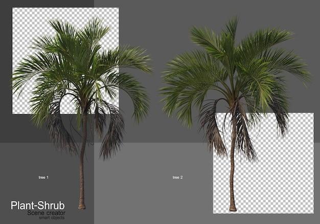 Divers palmiers et arbustes