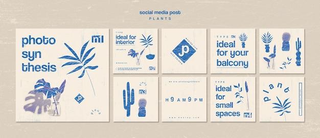 Divers types de plantes d'intérieur sur les médias sociaux