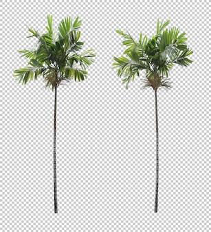 Ensemble d'arbres de noix d'arec isolé