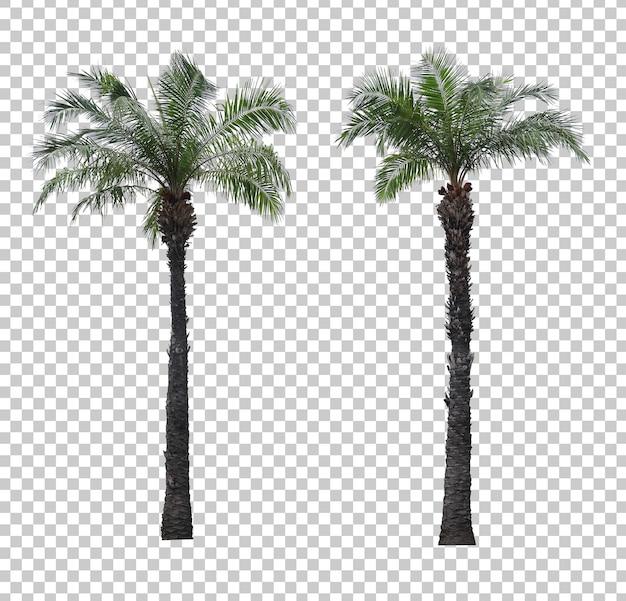Ensemble de palmiers réaliste isolé