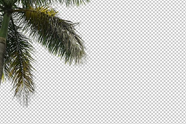 Feuilles d'arbres tropicaux et premier plan de branche isolé