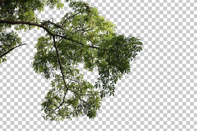 Feuilles d'arbres tropicaux et premier plan de branche