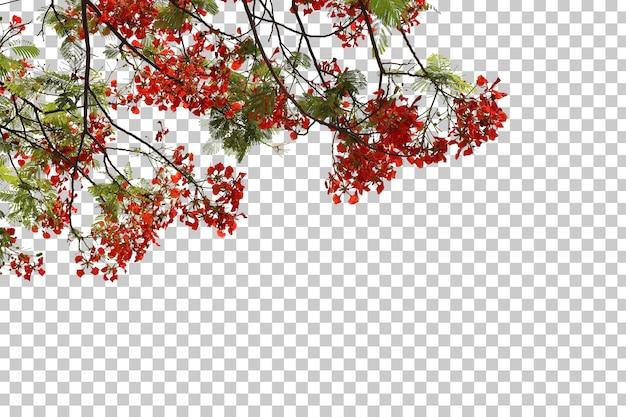 Feuilles de fleurs d'arbre tropical et premier plan de branche isolé