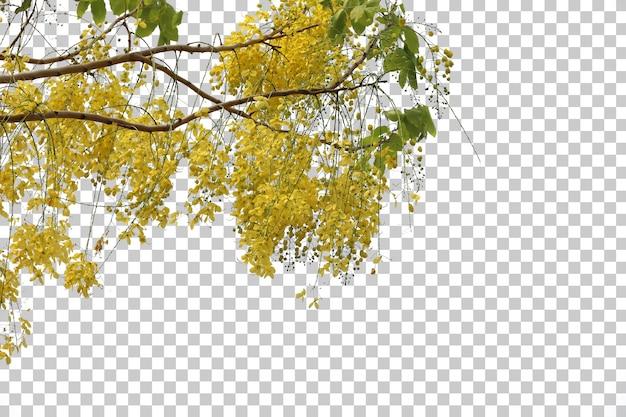 Feuilles de fleurs d'arbres tropicaux et premier plan de branche isolé