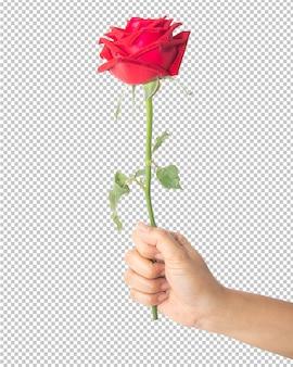 Fleur rose rouge à la main