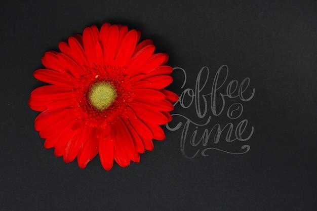 Fleur sur tableau noir