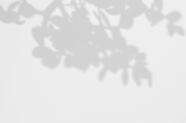 Fond d'été d'un arbre tropical ombres sur un mur blanc