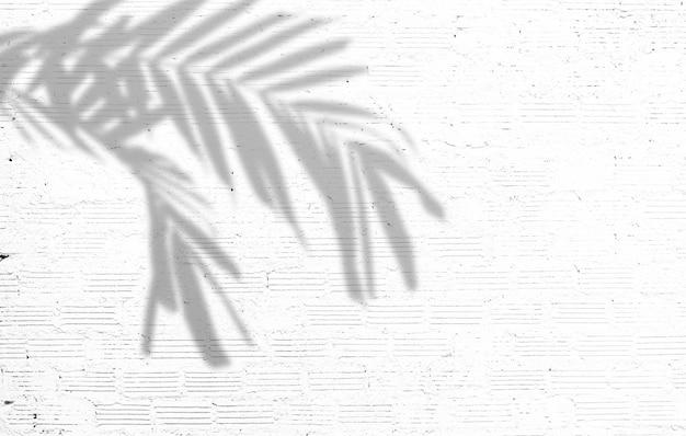 Fond d'été nature des feuilles de palmier ombres sur un mur de béton blanc