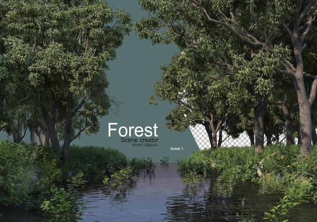 Forêt avec divers types d'arbres