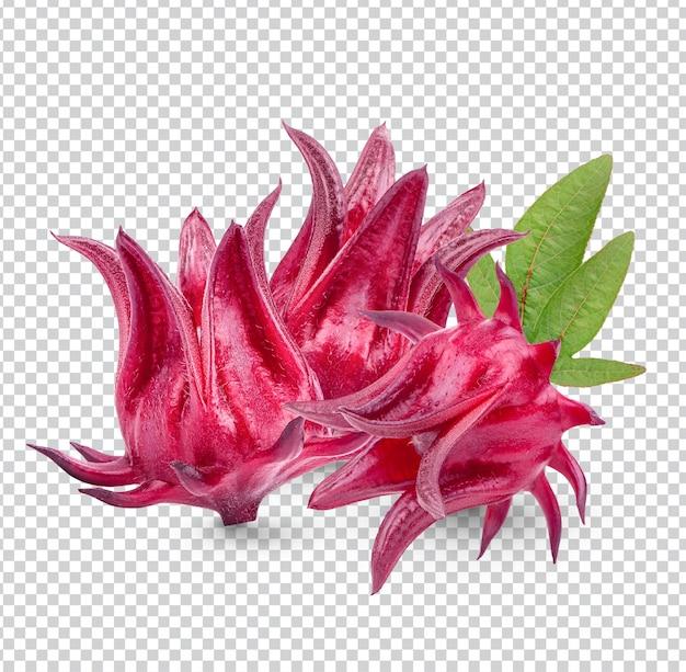 Fruits frais de roselle avec des feuilles isolées psd premium
