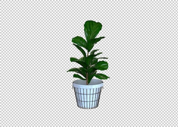 Grandes plantes vertes en pot
