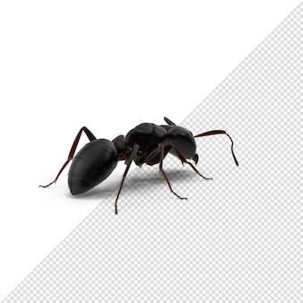 Gros plan sur 3d fourmi noir rendu isolé