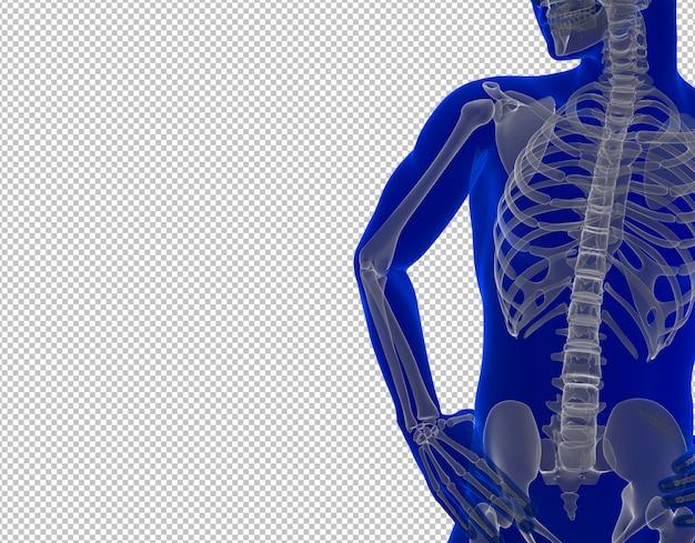 Gros plan squelette de l'homme