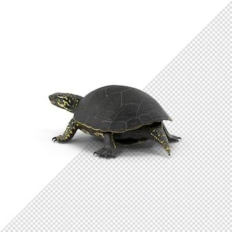 Gros plan sur la tortue en rendu 3d isolé