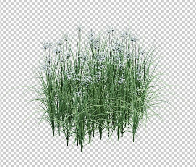 Herbe et fleurs