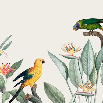 Illustration de macaw tropical