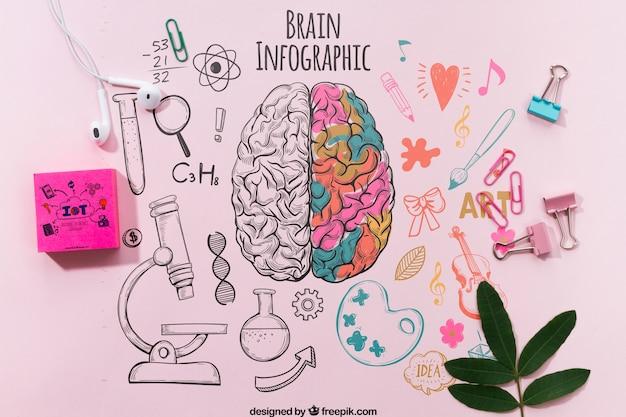 Infographie de cerveau coloré sur le modèle de table