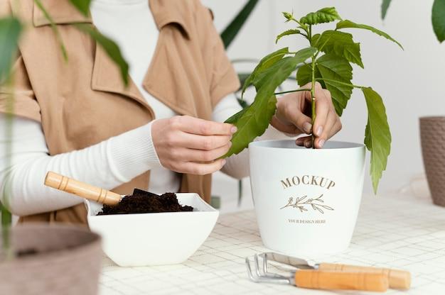 Maquette de plantation de végétation d'intérieur