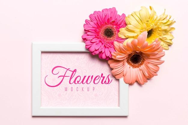 Marguerites colorées sur cadre blanc