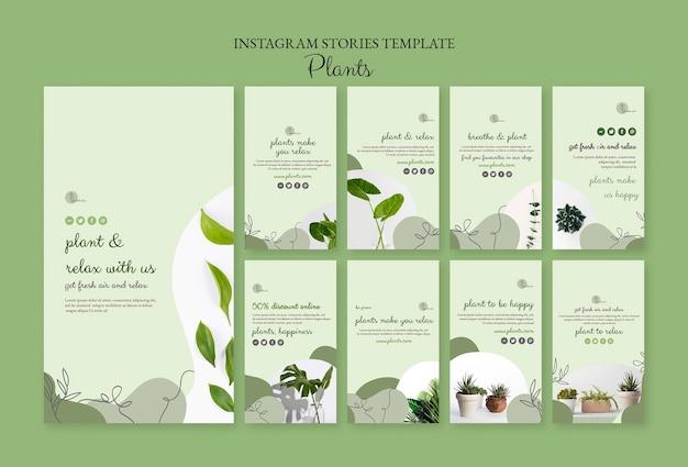Modèle d'histoires instagram de plantes