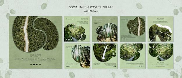 Modèle de publication sur les médias sociaux avec une nature sauvage